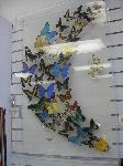 Butterfly Display - giant