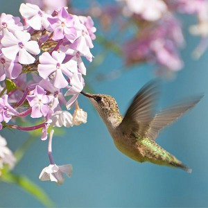 Zen Puzzle Small - Ruby-throated Hummingbird
